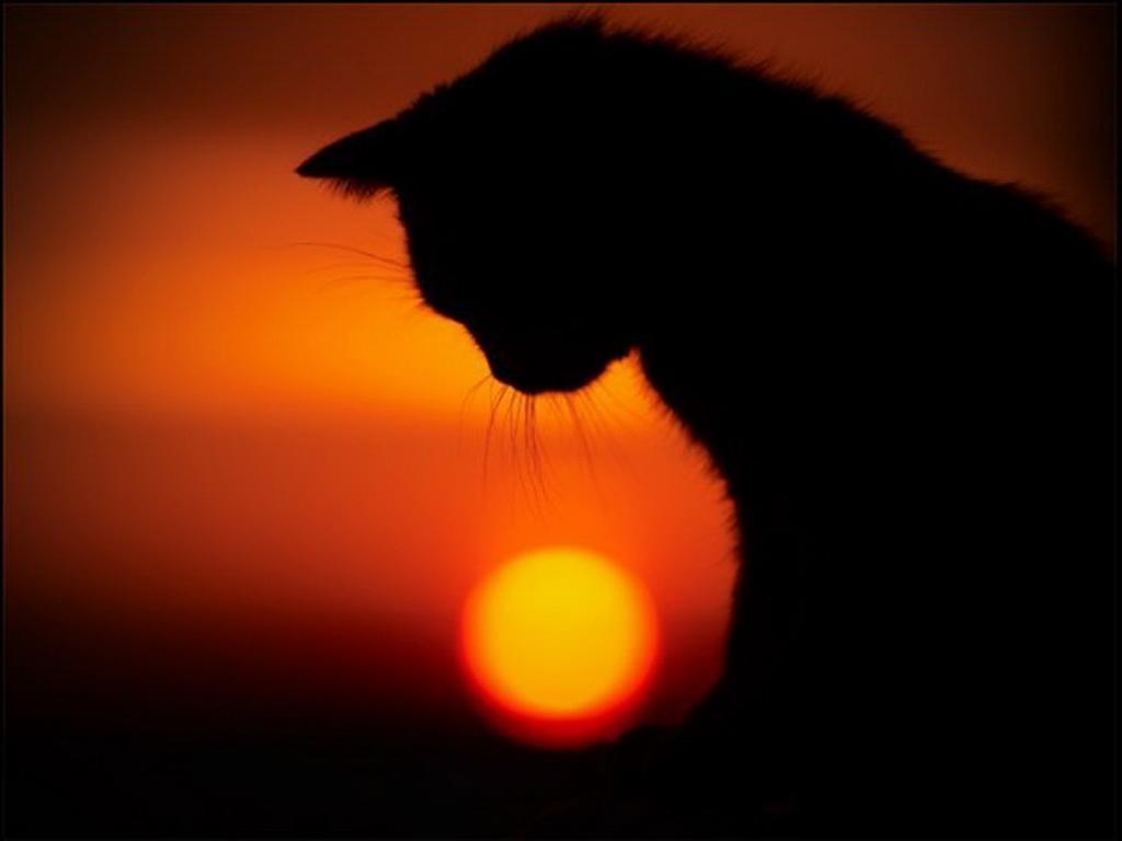 Кремация кошек кота в Перми Ветритуал